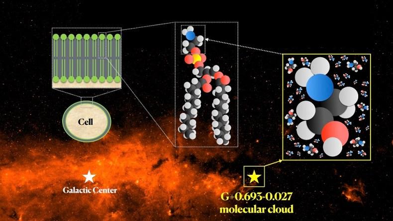 Sustancia de la membrana celular que se encuentra en el espacio