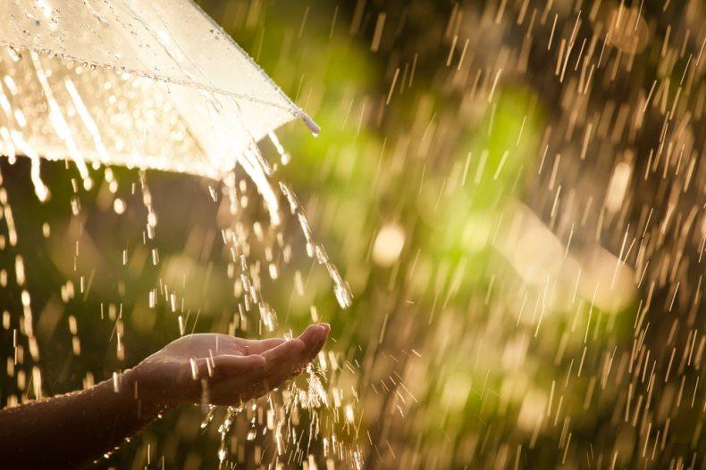 Paraguas en la lluvia con bosque de fondo.