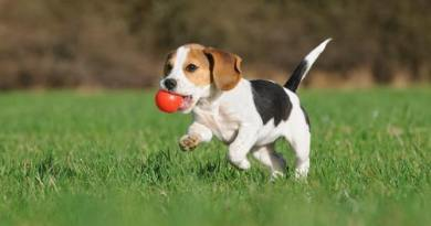 Video of a dog playing with a marble ball goes viral. Hillarious!-Netmarkers