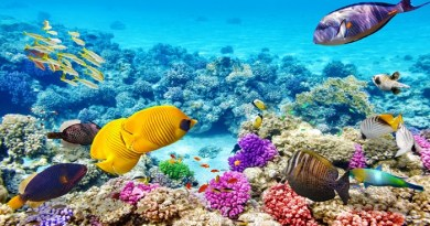Great Barrier Reef-Netmarkers