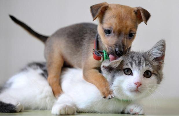 Pets insurance is must- Netmarkers
