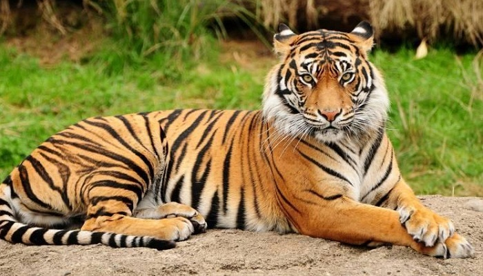 tiger strips-Netmarkers