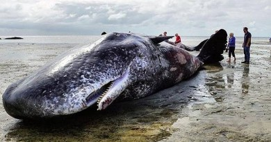 whale-Netmarkers