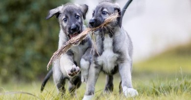 identical twin dogs -netmarkers