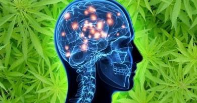 marijuana-alzheimer-treatment-netmarkers