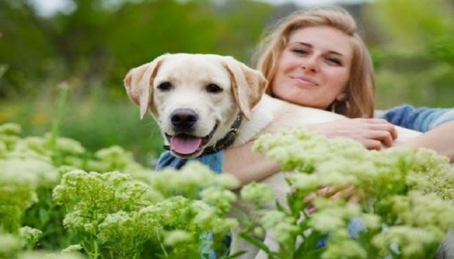 dog-netmarkers