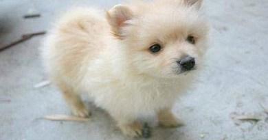 cute-puppy-Netmarkers