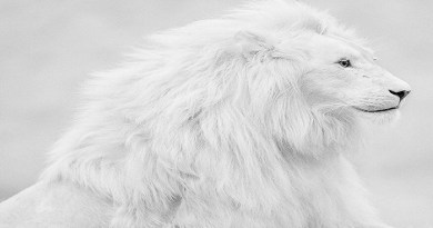 white-lion-netmarkers