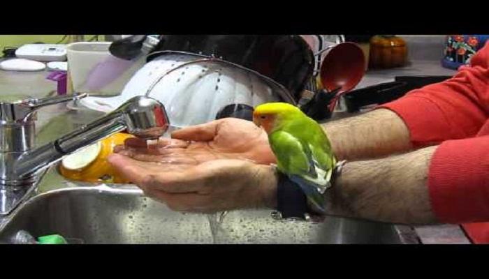 Trending-video-of-cute-bird-taking-bath-Netmarkers