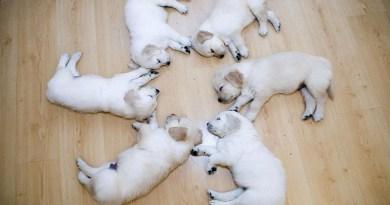 cute-puppy-Netmarkers-1