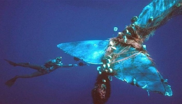 When-sea-animals-get-stuck-in-trash-netmarkers