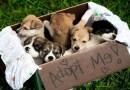 Top 10 Portals for Adopting a Pet