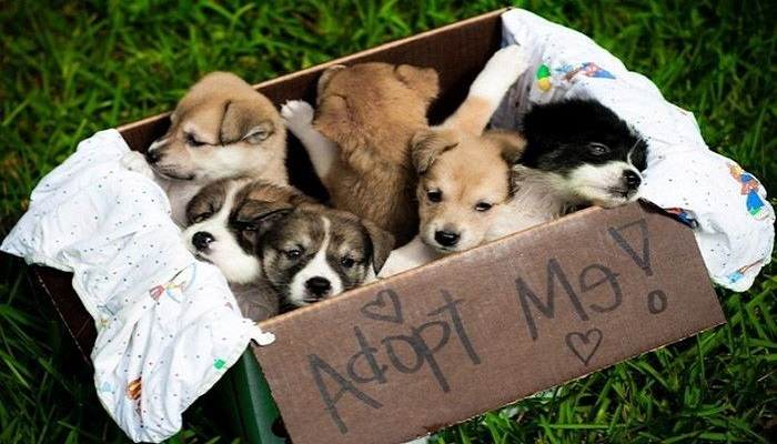AdoptUs-netmarkers