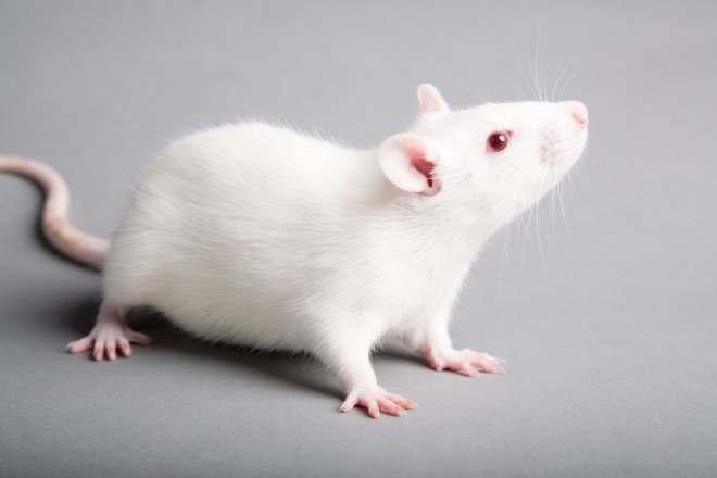 Rats-netmarkers