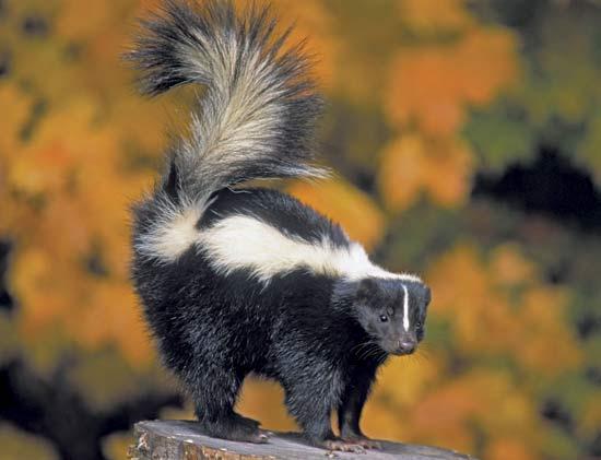 Skunks-netmarkers