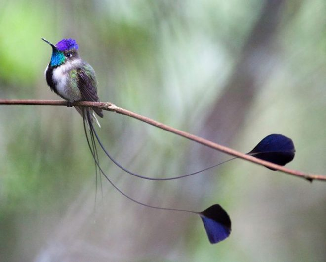 hummingbird-netmarkers