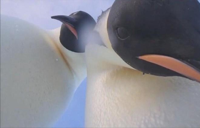 penguin3-netmarkers