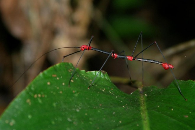 stick insect-netmarkers