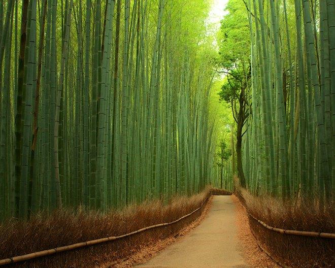 bambooforest-netmarkers