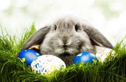 Free-Easter-Bunny-Wallpapers-HD-1024x640