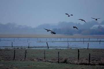 Justeringen af Natura 2000 områder har givet mange høringssvar