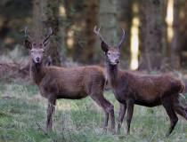 Jægerforbundet svarer vildtbiolog Egon Bennetsen
