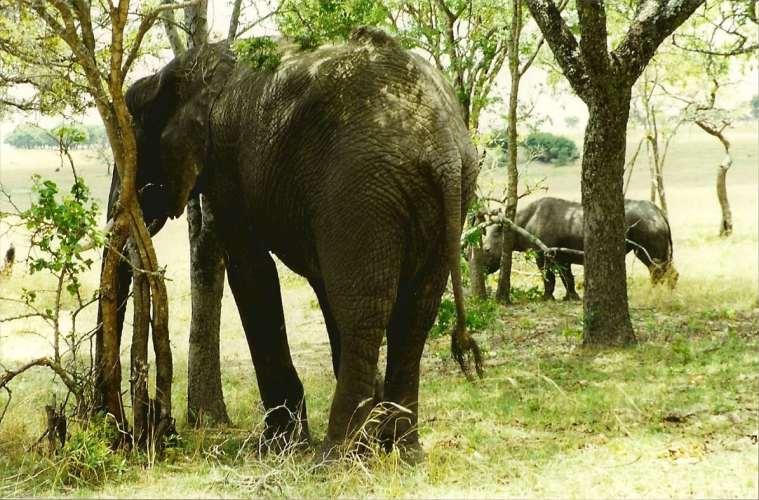 Zimbabwes sammenbrud truer landets vildtbestand
