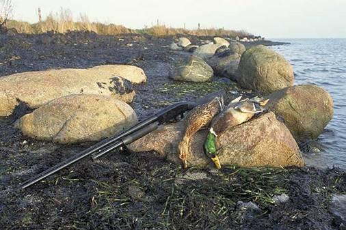 EU vejledning i bæredygtig jagt