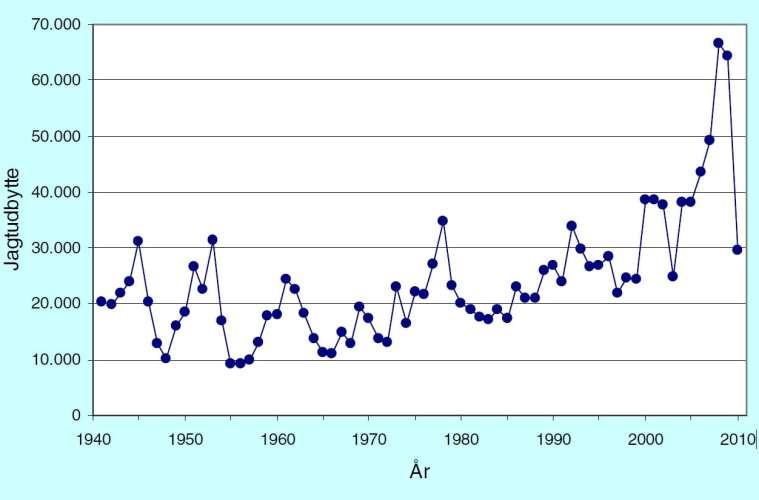 Figur1 - Jagtudbyttet af skovsneppe i jagtsæsonerne 1941/42 – 2010/11.