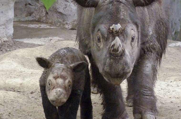 Totalt stop for handel med horn fra næsehorn