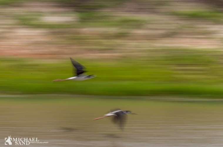 Vadehavets fantastiske trækfugle