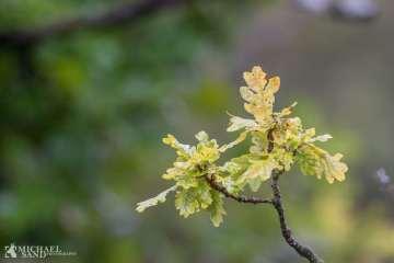 Kend dine vildtplanter: Egetræet