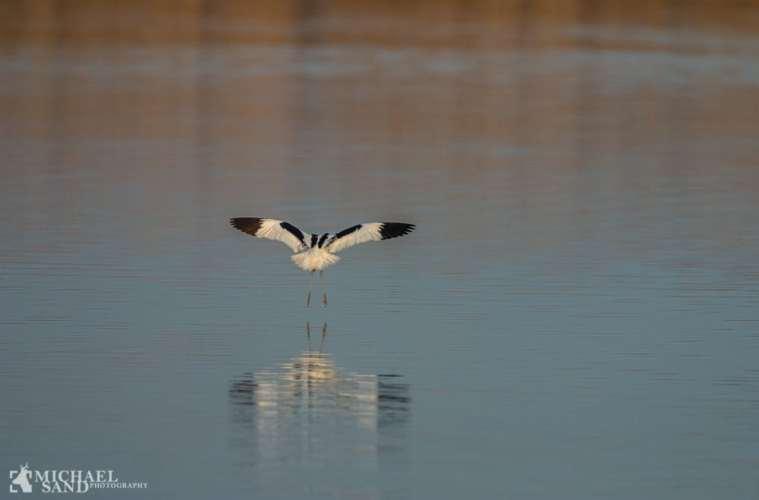 Fremgang for sjældne fuglearter i Sønderjylland