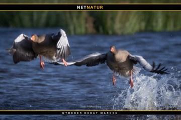 Fugle og klima