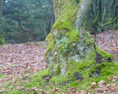 DN: Stop fældning af de gamle træer