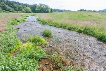 Pleje af småsøer og vandhuller 2