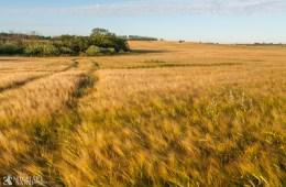 DN: Naturhensyn må tænkes ind i landbrugsstøtten