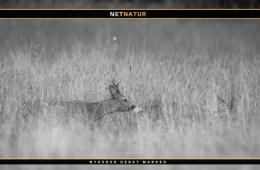 Brakmark og jagt