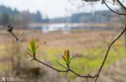 Danmarks Naturfredningsforening blandt de 5 mest magtfulde organisationer