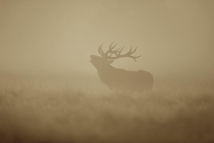 Helt uventet drejning af hjortevildt-forvaltningen