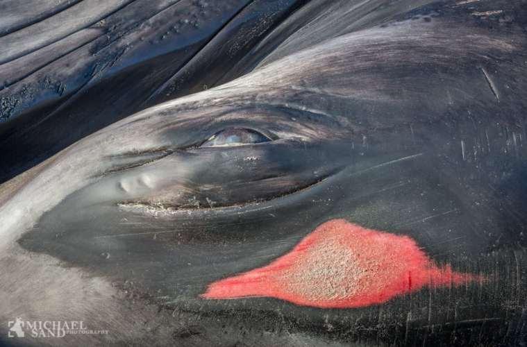 Hvaler var fyldt med plastic