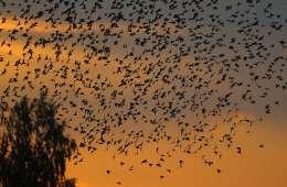 Millioner af fugle i Vadehavet nu