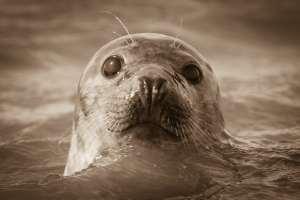 DJ Navy Seals er nu en realitet