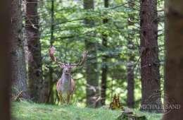 Privat skovrejsning - se dine muligheder