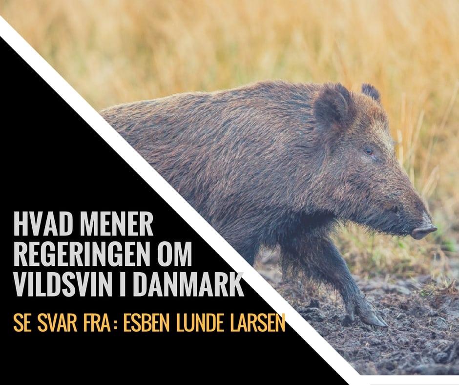 Esben Lunde Larsen om vildsvin i Danmark