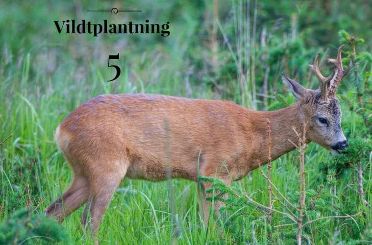Vildtplantning 5: Vedligeholdelse af beplantningen