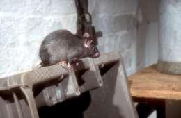 Rottegift skal kun ramme rotterne