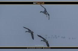 På fuglekig i Margrethe Kog