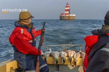 Strand- og havjagt versus forsikring