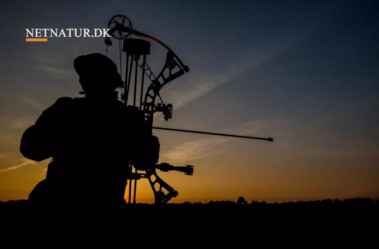 Falkejagt og buejagt på større hjortevildt tæt på lovliggørelse